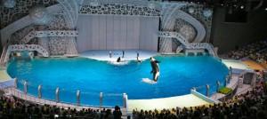 Представление с участием морских животных